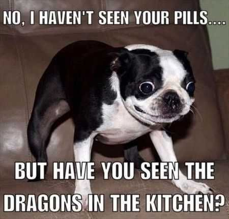 very funny dog picture