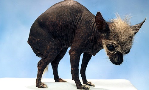 Most Ugliest Animals I...