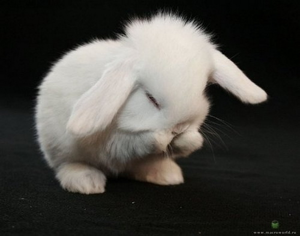 cute animals cute baby bunny