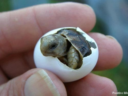 cute animals cute turtle