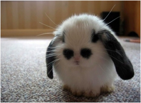 cute baby bunny cute animals