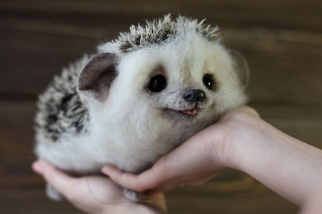 cute baby hedgehog cute animals