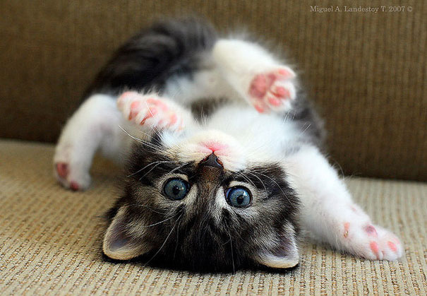 cute baby kitty cute animals