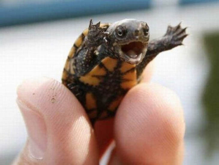 cute baby turtle cute animals