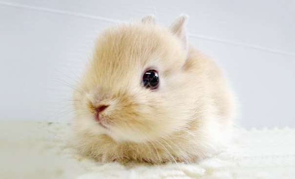 cute bunny cute animals