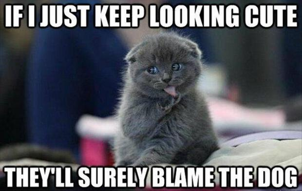 funny cat picture with caption