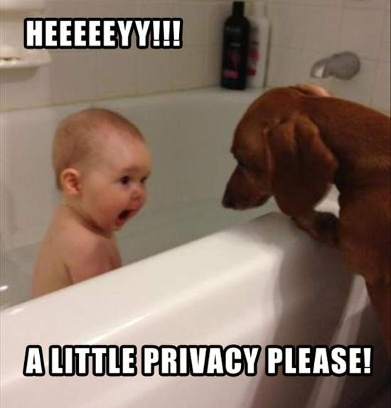 funny dog picture with caption