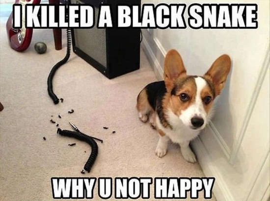 funny dogs pictures