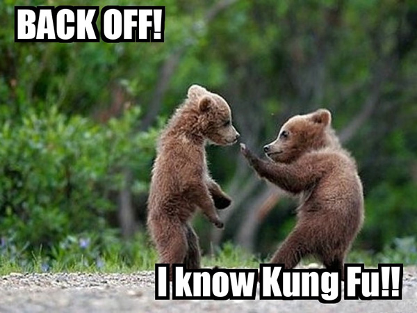 kung fu bear funny animals with caption