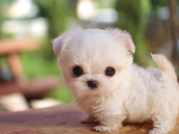 Top 20 Most Cutes Baby Animals - image most-cute-puppy-cute-animals on https://www.topbestpics.com
