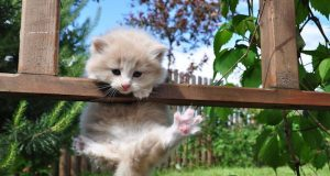 cute kitty funny cats