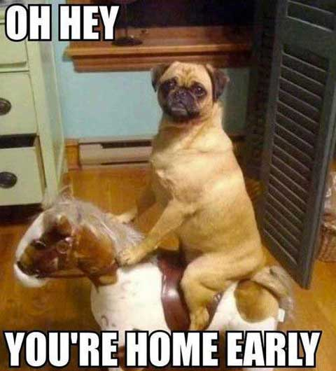 funny dog funny memes 2017