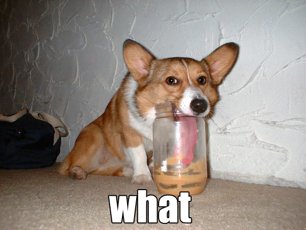funny dog funny pictures