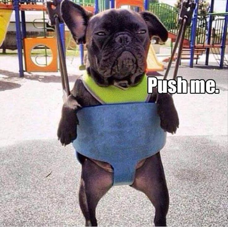 funny dog pics funny pictures