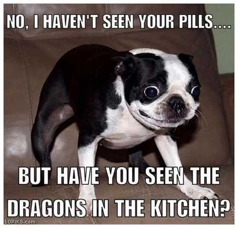 funny memes 2017 funny dog
