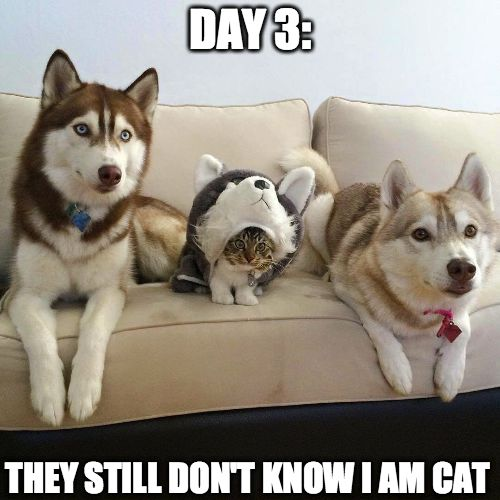 funny pictures funny animals
