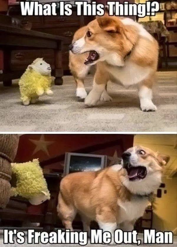 funny pictures funny dog fail