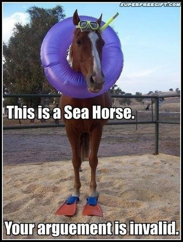 funny sea horse funny pictures