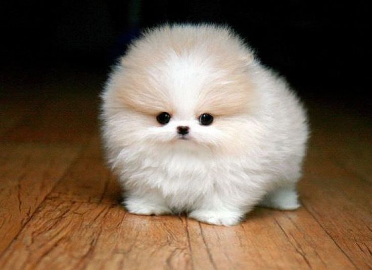 lovely puppy funny animals