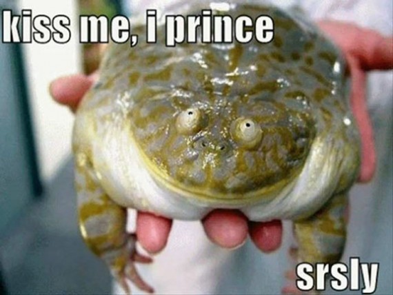 very funny pictures frog