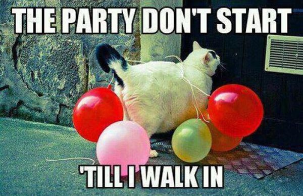 funny animals party meme