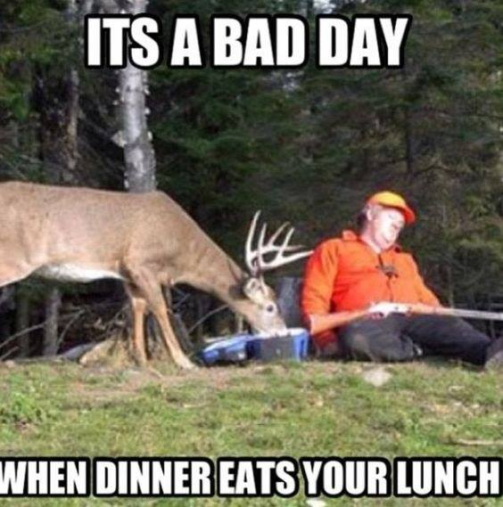 its a bad day funny pics