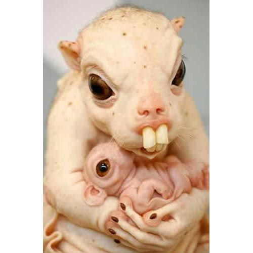 most ugliest animals in the world topbestpicscom