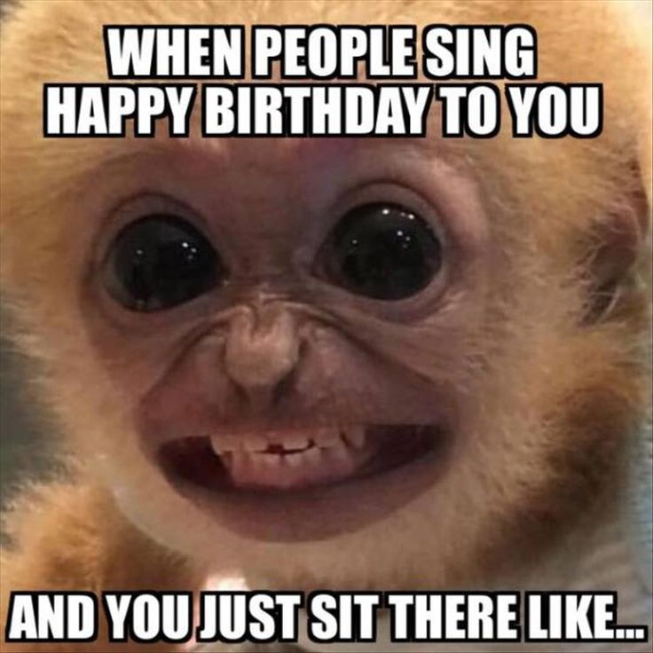 funny pics happy birthday