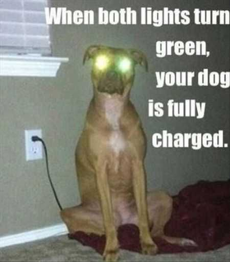 funny pictures funny dog