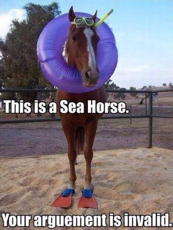 funny pictures seahorse